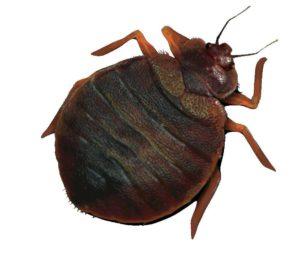 Воздействие на насекомых