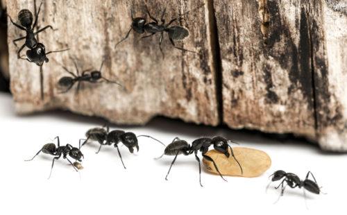 как муравьи находят дорогу домой