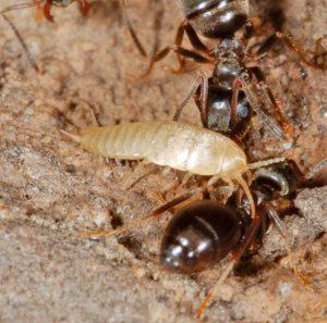 С кем можно спутать муравья