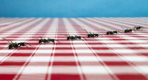 как избавиться от муравьев на кухне