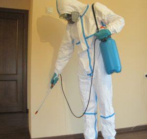 Борьба с муравьями при помощи дезинфекционных служб