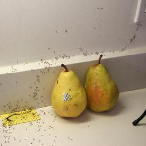 как вывести муравьев навсегда