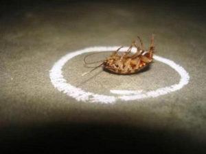 Преимущества и недостатки инсектицида