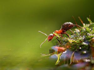 зачем муравью ноги
