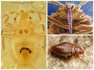 Что указывает на появление насекомых
