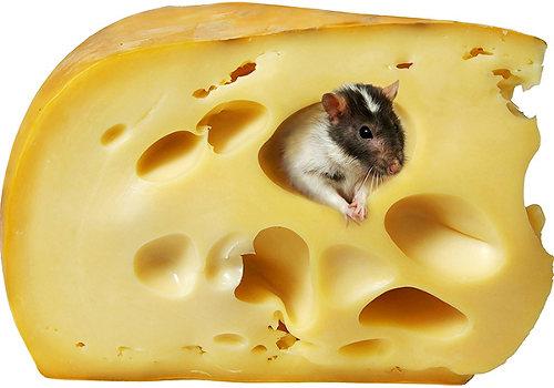 завелись мыши в доме