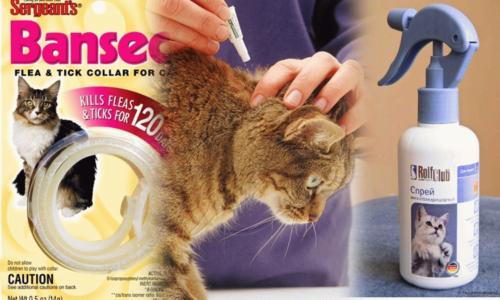 Эффективные средства от блох и клещей для кошек