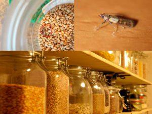 Пищевая бабочка-моль на кухне
