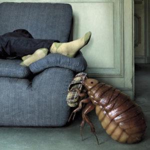 Как вывести блох из дивана