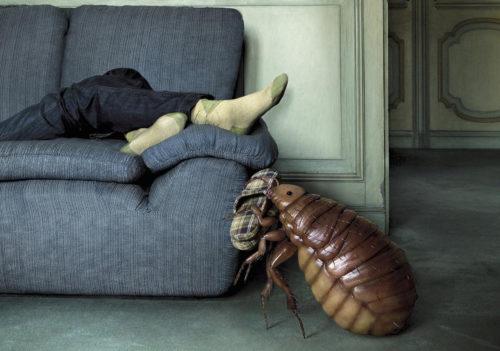 чем обработать кровать от паразитов
