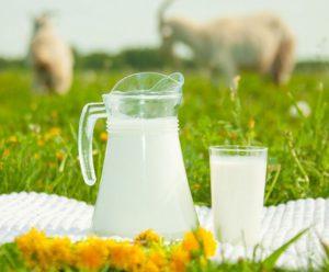 козье молоко как способ заражения