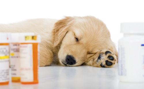 Эффективные народные средства от клещей для собак