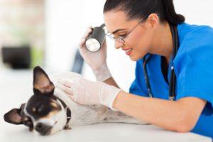визит к ветеринару