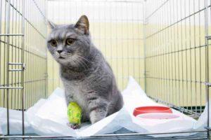 Изоляция кошки от других животных