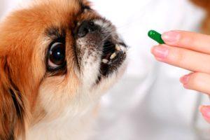 Преимущества использования таблеток от клещей и блох