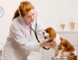 Поход к ветеринару