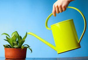 Как не допустить заражения зелеными паразитами