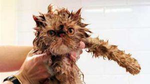 Использование мыла для кошек