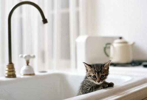 Как избавиться от блох у новорожденных котят