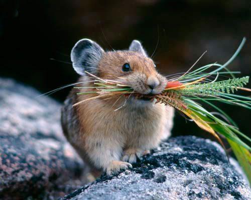 Как избавиться от мышей на дачном участке