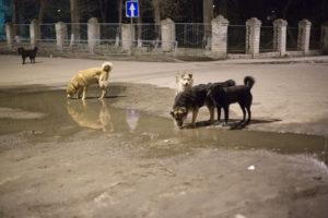 Опасность собачьих вшей