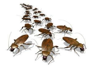 тараканы исчезнут из квартиры