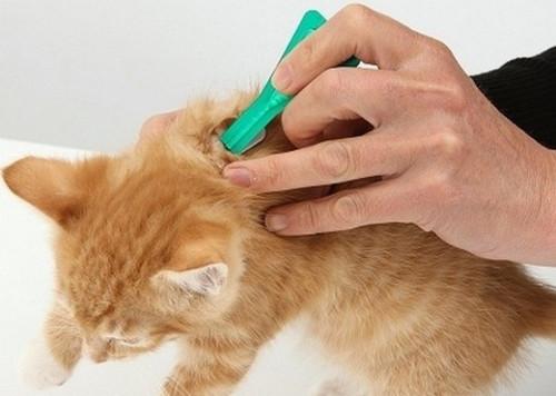 Чем и как обработать кошку от блох