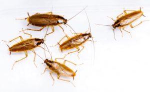 Тараканы разбегаются от света
