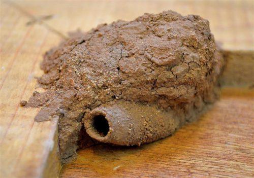 гнездо тараканов в квартире