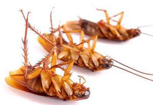 гибель тараканов