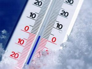 Гниды менее чувствительны к холоду