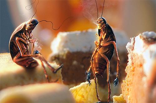 тараканы на кухне
