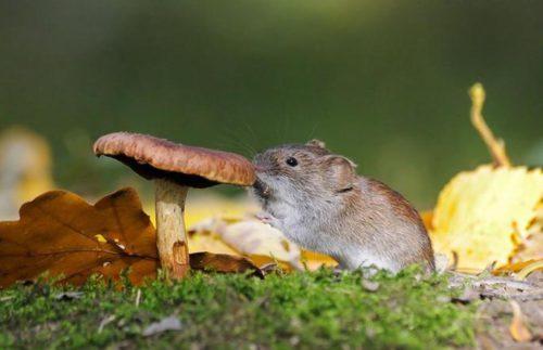 Лучшие средства от мышей на даче