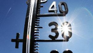 Оптимальная температура для этих паразитов +30°С