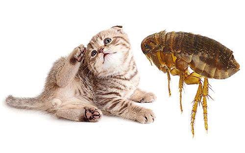Самые эффективные средства от блох для кошек