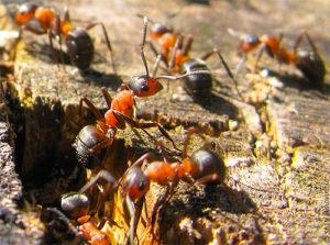 муравьи готовятся к зиме