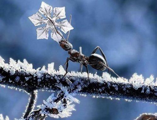 муравьи зимой