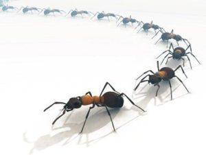 передвижение муравьев