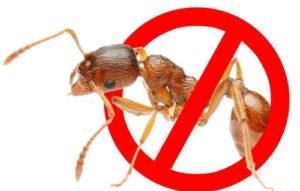 средство убивает муравьев