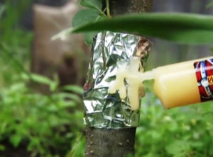 нанесение геля от муравьев