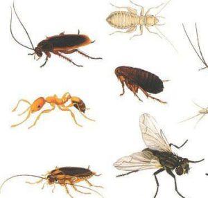 насекомые вредители