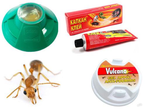 Ловушка для муравьев