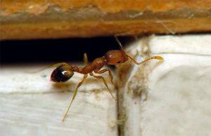 насекомые прячутся в темных труднодоступных местах