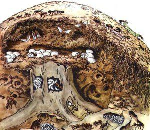 Структура муравейника
