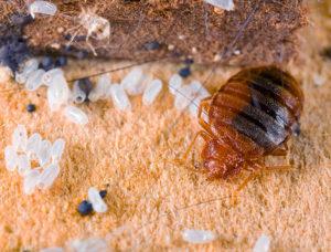 личинки соприкасаются с ядовитыми веществами и погибают