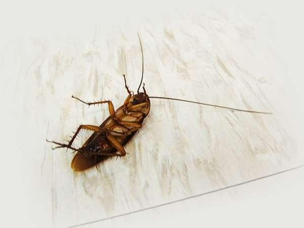 леомакс отпугиватель насекомых