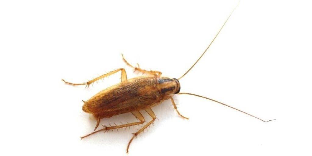 отпугиватель насекомых леомакс инструкция